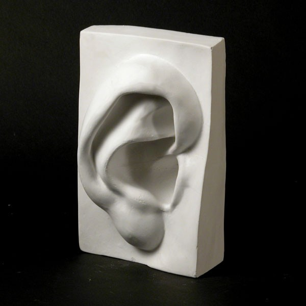 Drawing Plaster Cast Ear