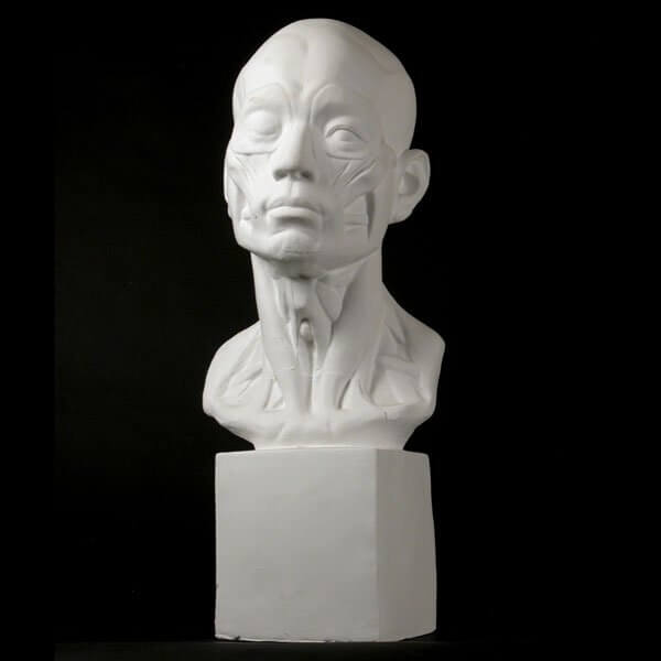 Drawing Plaster Cast Head (Anatomical)