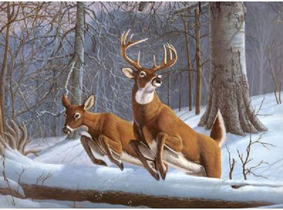Royal & Langnickel Painting by Numbers Adult Sets: White Tails