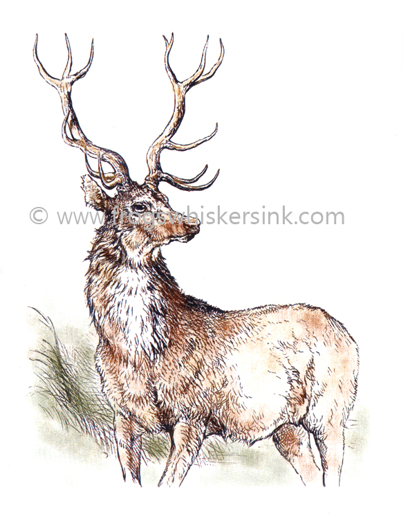 Stamps - Highland Stag