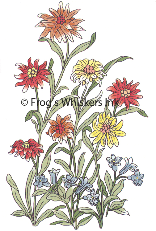 Ecstasy Crafts Frog's Whiskers Stamps - Summer Flowers