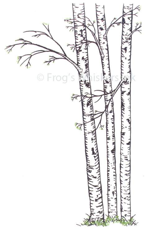 Ecstasy Crafts Frog's Whiskers Stamps - Birch Trees