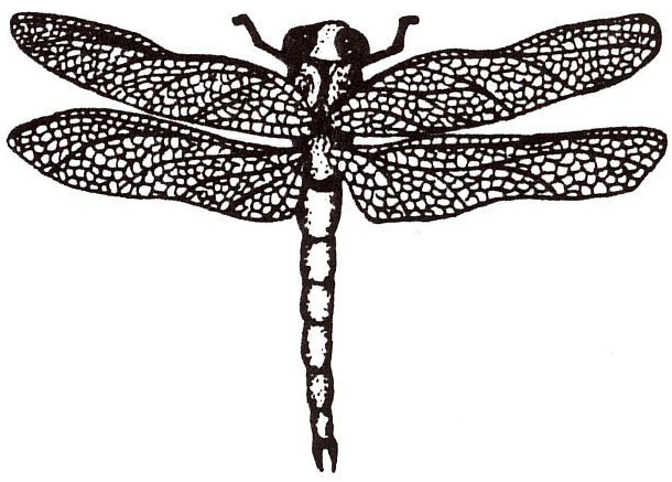 Sarasota Stamps Mounted Rubber Stamp: Dragonfly Small