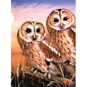 "Royal & Langnickel® Painting by Numbers™ 8 3/4 x 11 3/8 Junior Small Set Tawny Owls: 8 3/4"" x 11 3/8"", (model PJS87), price per set"