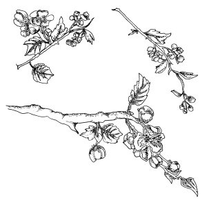 Claritystamps - Blossom Branch Stamp Set