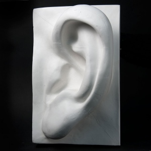 Natural Pigments Drawing Plaster Cast Ear (Giant)