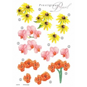 Craft UK Pearl Black Eye Susan
