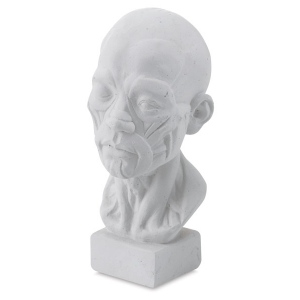 Natural Pigments Drawing Plaster Cast Miniature Head (Anatomical)