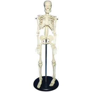 "Heritage Arts™ Child Plastic Skeleton: Plastic, 18"", Skeleton"
