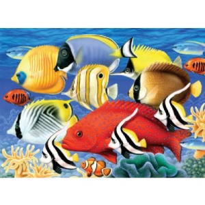 "Royal & Langnickel® Painting by Numbers™ 11 1/4 x 15 3/8 Junior Large Set Tropical Fish: 11 1/4"" x 15 3/8"", (model PJL30), price per set"