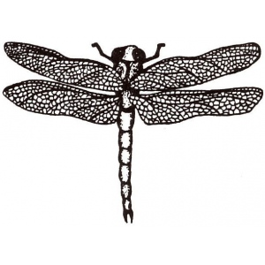 Sarasota Stamps Mounted Rubber Stamp Dragonfly Small: Rubber, Mounted