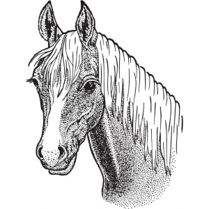 Sarasota Stamps Mounted Rubber Stamp Horse Head Large : Rubber, Mounted