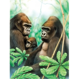 "Royal & Langnickel® Painting by Numbers™ 8 3/4 x 11 3/8 Junior Small Set Gorillas: 8 3/4"" x 11 3/8"""