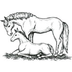 Sarasota Stamps Mounted Rubber Stamp Mare/Colt : Rubber, Mounted, (model SSD-1024), price per each