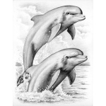 Reeves™ Medium Sketching by Numbers Dolphins: Multi, Drawing