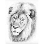 Reeves™ Medium Sketching by Numbers Lion: Multi, Drawing