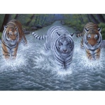 "Royal & Langnickel® Painting by Numbers™ 11 1/4 x 15 3/8 Junior Large Set Three Tigers: 11 1/4"" x 15 3/8"", (model PJL34), price per set"