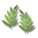 Dee's Distinctively Dies - Sm. Pair Leaves