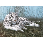 "Royal & Langnickel® Painting by Numbers™ 11 1/4 x 15 3/8 Junior Large Set White Tigers: 11 1/4"" x 15 3/8"""
